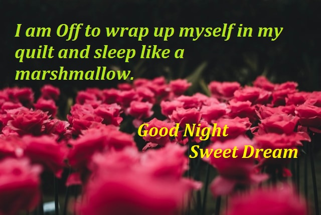 Good Night Images, Photos, Pics, Hd Images, Quotes, Wallpaper Download