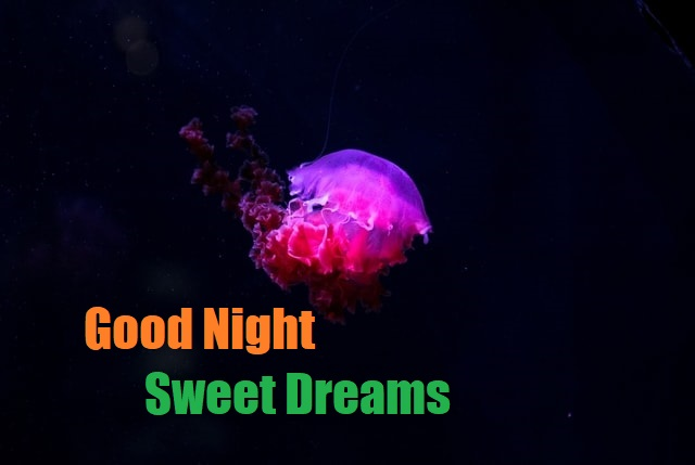 Good Night Image For Friends