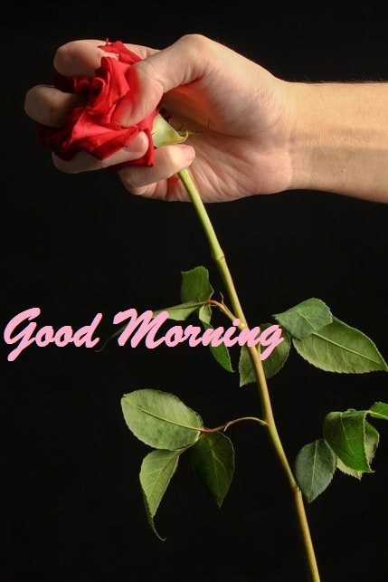 Good Morning Images Photo Pic
